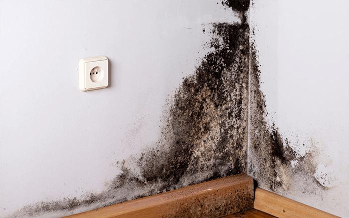 Dégradation des murs