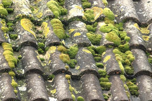 Mousse sur les toitures, augmentation de la porosité